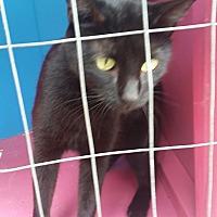 Adopt A Pet :: Nova - Ocala, FL