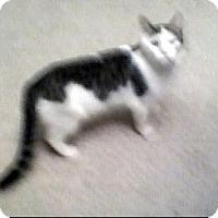 Adopt A Pet :: China URGENT - Fowlerville, MI
