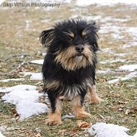 Adopt A Pet :: Sully - Neenah, WI