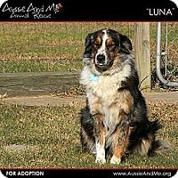 Adopt A Pet :: Luna - Sarasota, FL