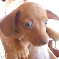 Adopt A Pet :: Gretchen - dewey, AZ
