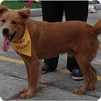 Adopt A Pet :: Jerry - Kingwood, TX