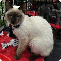 Adopt A Pet :: Winslow - Harrisburg, NC
