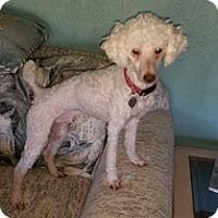 Adopt A Pet :: RYKER - Melbourne, FL