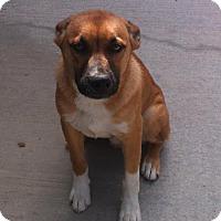 Adopt A Pet :: Titan - Newbury Park, CA