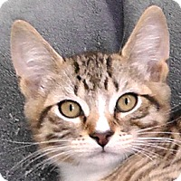 Adopt A Pet :: Pierre - Redondo Beach, CA
