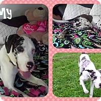 Adopt A Pet :: Stormy - DOVER, OH