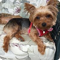 Adopt A Pet :: Minnie - Los Angeles, CA