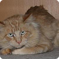 Adopt A Pet :: Ramses - Hamilton, ON