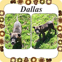 Adopt A Pet :: Dallas meet me 3/18 - Manchester, CT
