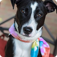 Adopt A Pet :: Orion - Baton Rouge, LA