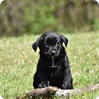 Adopt A Pet :: Harper - Groton, MA