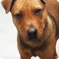 Adopt A Pet :: Renni - Lincolnton, NC