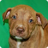 Adopt A Pet :: Tyreese - Modesto, CA