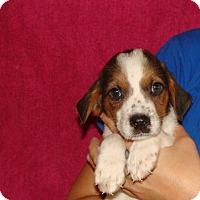 Adopt A Pet :: Mako - Oviedo, FL