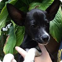 Adopt A Pet :: Mario - Bradenton, FL