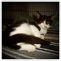 Adopt A Pet :: BRENTLEY - Medford, WI