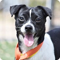 Adopt A Pet :: Wilson - Colorado Springs, CO