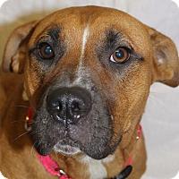 Adopt A Pet :: Abby - Dearborn, MI