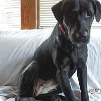 Adopt A Pet :: Duchess - Aurora, IL