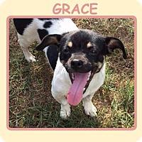 Adopt A Pet :: GRACE - Dallas, NC