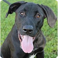 Adopt A Pet :: ALLEN - Red Bluff, CA