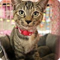 Adopt A Pet :: Wildfire - Greensboro, GA