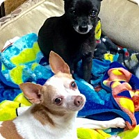 Adopt A Pet :: NO FEE - Mookie & Pablo - Corning, CA