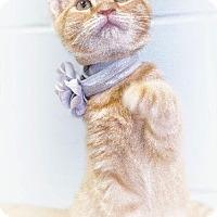 Adopt A Pet :: Ollie - Leesburg, FL