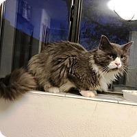 Adopt A Pet :: Jupiter Buddy - Grand Junction, CO