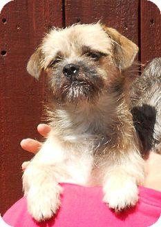 Garrett   Adopted Dog   El Segundo, CA   Pug/Brussels ... Brussels Griffon And Pug Mix