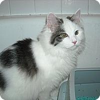 Adopt A Pet :: Montana - Arlington, VA