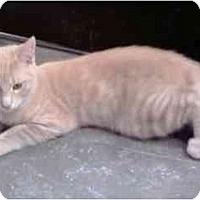 Adopt A Pet :: Oscar - Greenville, SC