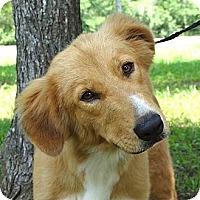 Adopt A Pet :: *Charleigh - PENDING - Westport, CT