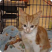 Adopt A Pet :: Rosalee - Riverside, RI