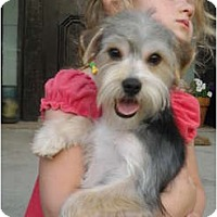 Adopt A Pet :: Woody - Hilliard, OH