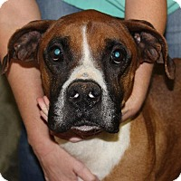 Adopt A Pet :: Ely - Nashville, TN