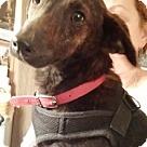 Adopt A Pet :: Reece