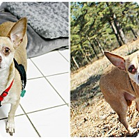 Adopt A Pet :: Lily - Forked River, NJ