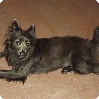 Adopt A Pet :: Ashleigh - Phoenix, AZ