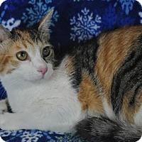 Adopt A Pet :: Mulan - Mesa, AZ