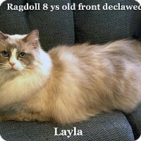 Adopt A Pet :: Layla - Bentonville, AR