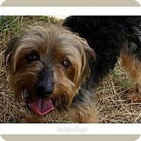Adopt A Pet :: Oliver Twist - San Antonio, TX