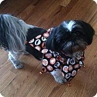 Adopt A Pet :: Cloe - Greeley, CO