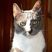 Adopt A Pet :: Simon/Theodore - Staten Island, NY