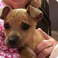 Adopt A Pet :: Tess - Alpharetta, GA