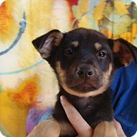 Adopt A Pet :: Mars - Oviedo, FL