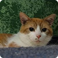 Adopt A Pet :: Freedom - Elyria, OH