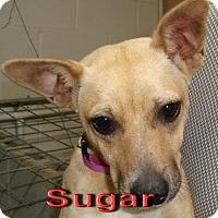 Adopt A Pet :: Sugar - Coleman, TX