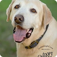 Adopt A Pet :: JAKE - Chandler, AZ